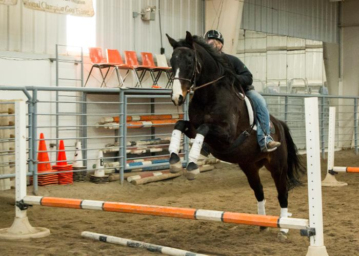 English style horse jumping in the CWC equine center