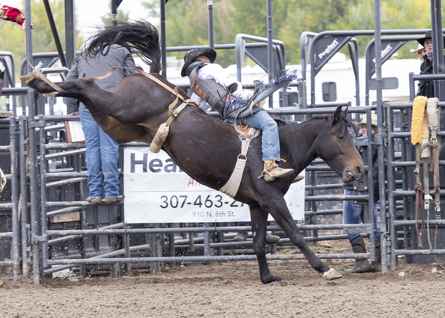Rustler cowboy, Rickey Williams hangs on in the bareback riding