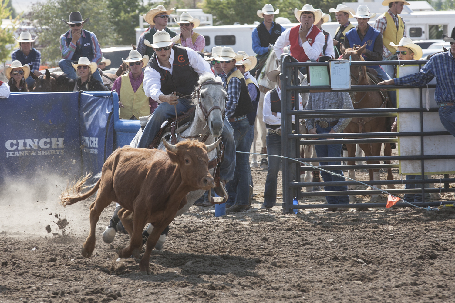 CWC rodeo cowboy Dalton Burgener speeds up his horse to wrestle a steer